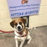 Pampered Pets Dog Training profile image.