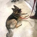Pampered Pets Dog Training profile image.