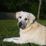 Sit and Stay Pet Sitting profile image.