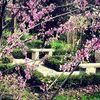 Arbor Garden Centre and Nursery profile image