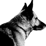 WhyzDog Behavioural Counselling & Training profile image.