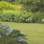 Newham's Garden Services profile image.