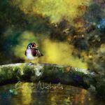 Image Projections Portrait Studio profile image.