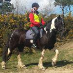 East View Riding Centre profile image.