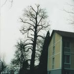 Atlas Trees profile image.