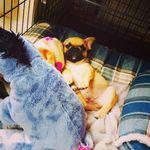 Oli Juste Dog Trainer & Behaviourist profile image.
