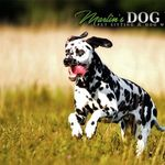 Martin's Dog Walks profile image.