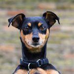 Alpha Dog Agency profile image.