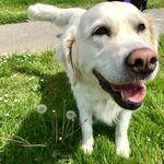 Wagnolia Pet Sitting profile image.