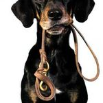 Web Image Designs profile image.