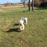 Seggamyr Dog Walking profile image.