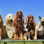 Complete Canine Companion