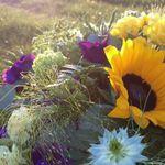Ellie Flowers profile image.