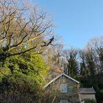 Matthew Murray Tree Services profile image.