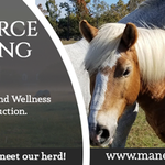 Mane Source Counseling profile image.