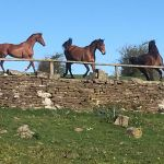 golden castle riding stables profile image.