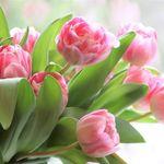 Raimondi's Florist profile image.