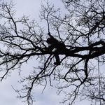 Guildford Tree Surgeons profile image.