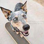 Victoria Rak, Tuff Photo, Commercial Pet Photography, Pet Photographer, Animal Photographer, Commercial Photographer profile image.