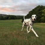 Dotty Dog profile image.