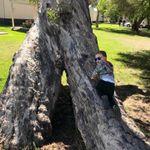 Holme Tree Surgery profile image.