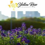 Yellow Rose Counseling & Assessment profile image.