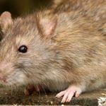 Aardvark Pest Control profile image.