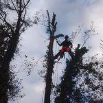 VOJ Maintenance Landscapes and Groundcare profile image.