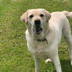 Top Dog  profile image.