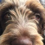Dog Trots profile image.