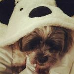 Pawfect Dog Grooming profile image.