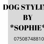 Dog Styling by Sophie at Yordogs profile image.