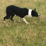 Katy Cropper Dog Training profile image.