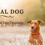 Ideal Dog profile image.