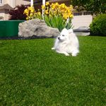 Artificial Grass & Landscaping - AGL profile image.