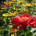 Brocious Home and Garden Care profile image.
