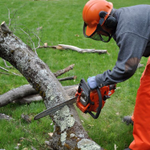 Pintos Tree Felling/Rubble Removal profile image.