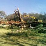Cape to Cairo Tree Felling profile image.