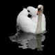Swan Psychotherapy logo
