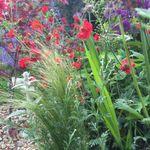 Anita Barber Garden Design profile image.