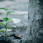 TreeLink Arboriculture Ltd. profile image.