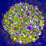 Alaska Photography & Garden Service profile image.