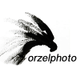 Orzel - Matt Waliszek Photo and Film logo
