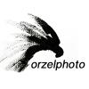 Orzel - Matt Waliszek Photo and Film profile image
