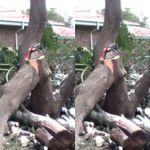 TC TREE Felling profile image.