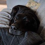 All Creatures Great & Small Pet Sitting Services profile image.