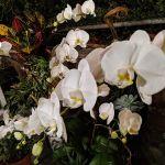 Scarsella's Flowers Greenhouse and Home  profile image.