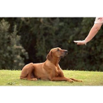 Dog Behaviourist & Owner Training profile image.