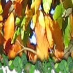 Acorn Tree Service Ltd  profile image.