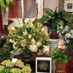 Bloomies on 42 profile image.